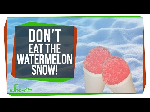 Don t Eat the Watermelon Snow