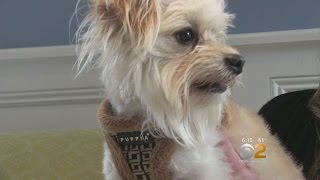 Woman Reunites With Missing Dog