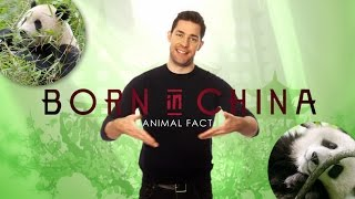 """Panda Fact"" Featuring John Krasinski - Born in China Animal Fact"