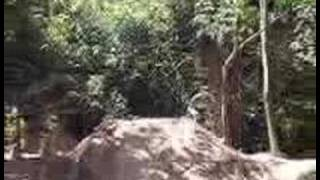 Panico na Floresta