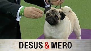 The Westminster Dog Show