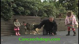 Junior Protection Dog Trainers.mov