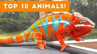 Top Ten Funny/Cute Pet Videos of August Part 5