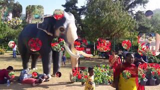 Munnar winter flower show 2017-18, Hydel park, Munnar, Iddukki, Kerala