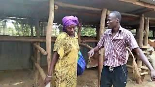 Luhya Love   2