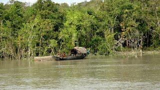 Sundarban Tour Part 2|Sundarban Bangladesh