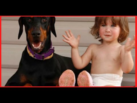 Xxx Mp4 This Dog Threw A Child Across The Yard But When The Mom Saw Why She Could Not Believe Her Eyes 3gp Sex