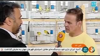 Iran Canary market report, Azadegan highway, Tehran city بازار قناري آزادگان تهران ايران