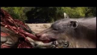 Prehistoryczne Bestie Niedźwiedź Krótkopyski