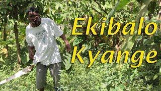 Ekibalo Kyange - Best Ugandan  Comedy skits.