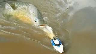 How To Fishing By Using RC Boat In Cambodia -Khmer Fishing At Siem Reap Cambodia