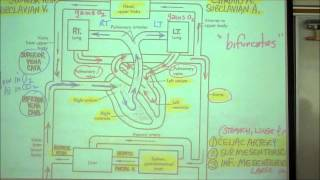 ANATOMY; CIRCULATORY SYSTEM; PART 1 by Professor Fink