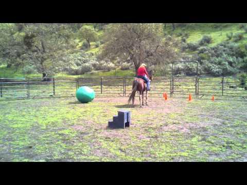 Xxx Mp4 Horse Soccer 3gp 3gp Sex