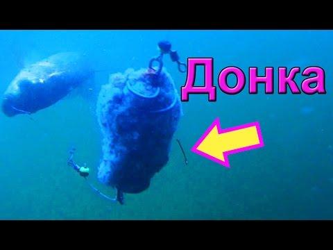 клев карпа видео подводные съемки