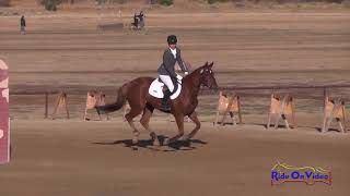 073S Azure Siraco on Bold n Royal JR Training Show Jumping Twin Rivers Ranch September 2017