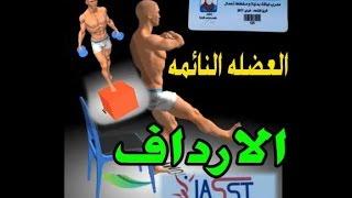 تمارين العضله النائمه | الخفسه | الاسكوات | غمازات الورك |  Exercises leges