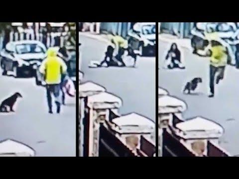 Xxx Mp4 Real Life Bolt Hero Stray Dog Saves Woman From Mugger 3gp Sex