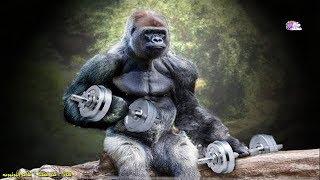 15حيوان يمتلكون عضلات خارقة أقوى من أبطال كمال الاجسام !