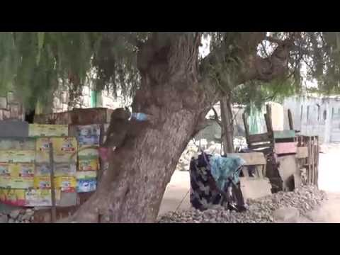 Xxx Mp4 A Monkey Drinks Hot Tea In Hargeisa Somaliland After It Grabbed From A Man 3gp Sex