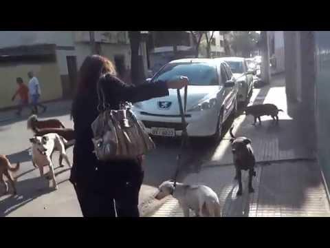 RESGATE DA CADELA NO CIO NO CENTRO DE CACHOEIRO ES