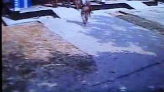 CCTV VIDEO OF PILKHANA TRAGEDY -COURTESY CH 1