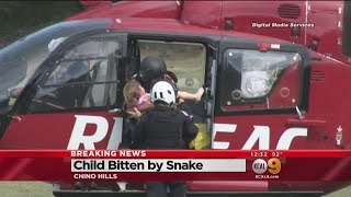 Girl, 3, In Critical Condition After Being Bitten By Snake