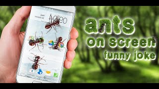 Ants On Screen Funny Joke - Android Application