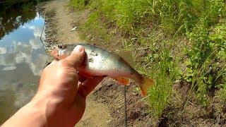 ловля на реке сейм судака на что
