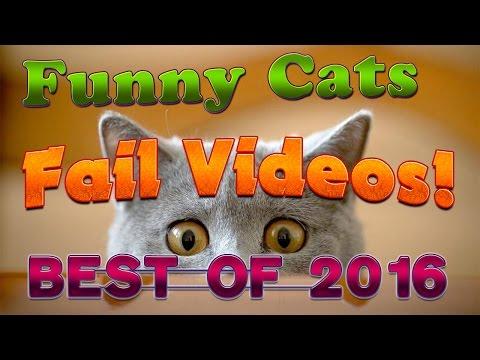 Funny Cats Fails Compilation 2016 Best Cats Fails Ever
