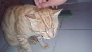 Stray Cats Crying at Midnight