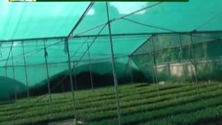 Know more about the benefits of shed net farming