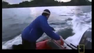 Amazing Orca Killer Whales In The Wild Full Nature Wildlife Documentary