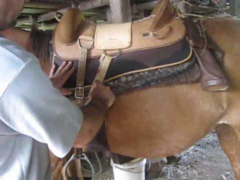 Aprenda a encilhar cavalo Encilhando a Mercedita.wmv