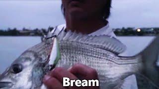 Australia Land Base Lure Fishing Vol.39 Bream 陸っぱりルアーフィッシング