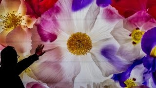 Harold Davis - Photographing Flowers for Transparency