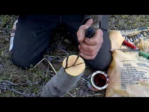 Elma aşılama emirhisar çivril denizli turkey grafting for appel alara fidan