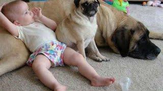 Hunde sind Babysitter und beschützer - Süße Hunde passen auf Babys auf.