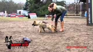 4 months old German Shepherd puppy - protection training