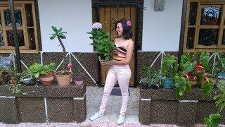 Tour por mi jardín después de la mudanza│Candy Bu