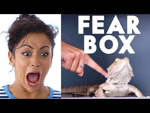 Xxx Mp4 Liza Koshy Touches A Bearded Dragon Chinchilla Amp Other Weird Stuff In The Fear Box Vanity Fair 3gp Sex