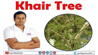 khair tree or senegalia catechu