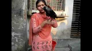 Kamini, The Talking Crow from Rajshahi
