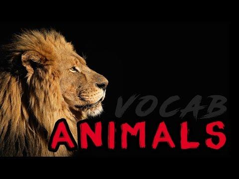 Xxx Mp4 Japanese Vocabulary Animals 3gp Sex