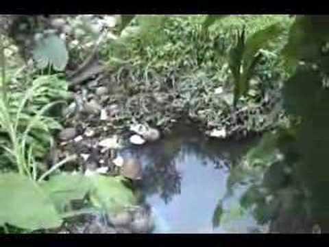 LOS RIOS NO SON BASUREROS