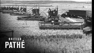 Wheat Harvest USA (1947)
