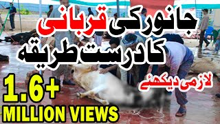 Qurbani ka Amli Tareeqa - Madani Muzakra on Bakra Eid Day Part 3 - (Practical Way of Qurbani)