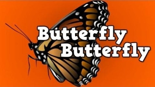 Butterfly, Butterfly!    (a song for kids about the butterfly life cycle)