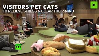 Feline therapy: Tokyo cat cafe helps guests with life's problems