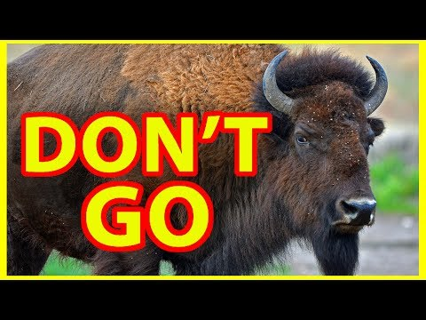 Why NOT to Visit Yellowstone National Park DON T GO