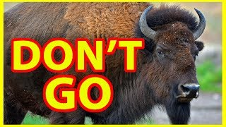 Why NOT to Visit Yellowstone National Park -- DON